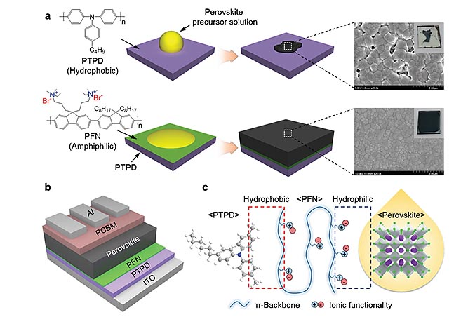 Amphoteric conjugated polyelectrolyte solubilizers prepared high-quality perovskite films.